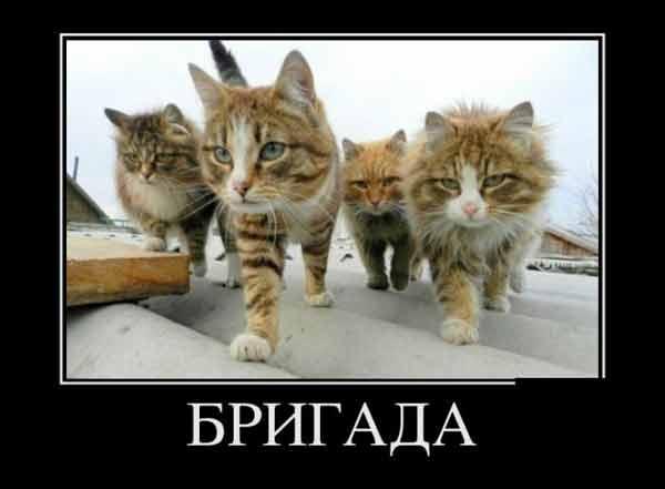 http://bestbush.ucoz.com/_ph/1/882341210.jpg